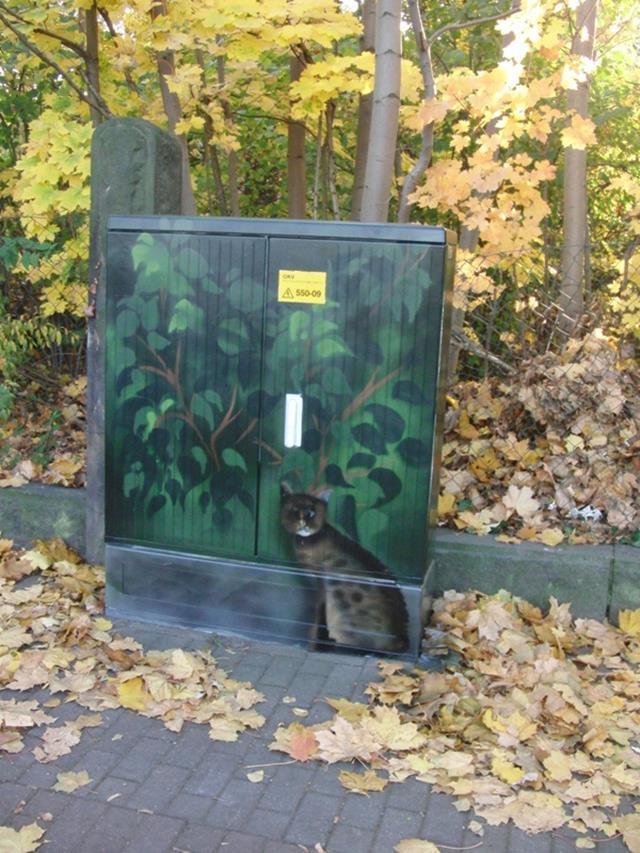 Katze sitzt vor einem Busch